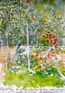 The silver birches in the corner of mums garden. Sketched this time last year.
