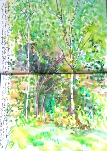 Corner of mums garden, the birches and the old rose. First drawing in my new sketchbook.